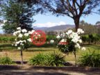 澳大利亚维多利亚州瓦尔瓦的乡郊地产,8792 Murray River Road,编号38780496
