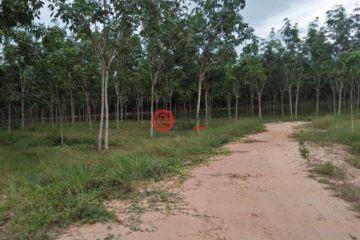 居外网在售柬埔寨Kracheh的房产总占地10000000平方米USD 4,500,000