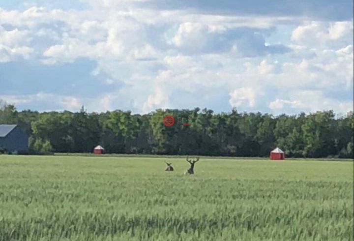 加拿大马尼托巴Broad Valley的农场,编号58074192
